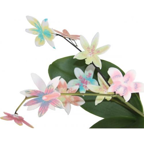 Вафельные орхидеи микс, 9 шт.